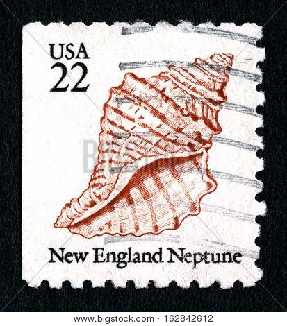 UNITED STATES OF AMERICA - CIRCA 1985: A used postage stamp from the United States of America dedicated to the New England Neptune Sea Snail circa 1985.
