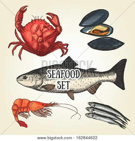 Creative seafood graphic sketch. Vector prawn, crab, oyster, salmon and sprat. Realistic seafood used for advertising products, restaurant menu or banner and poster creation.