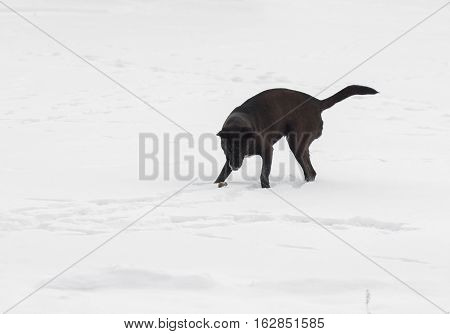 Stray dog playing with prey (little mouse) at winter season