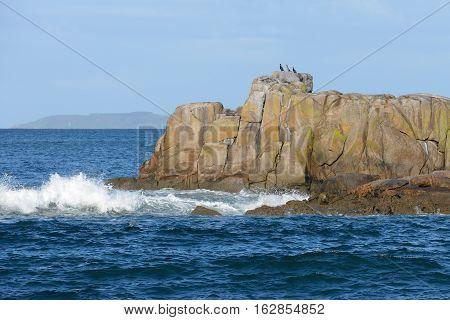 cormorants on a rock in the ocean