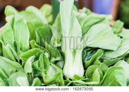 Group of organic bok choy on display at the farmer's market.