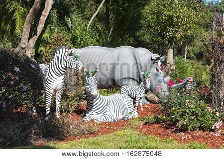 Gotha Florida - December 22nd 2016: Zebras and a rhinoceros grazing in the garden decorated with Christmas Ornaments on their heads Gotha Florida - December 22nd 2016