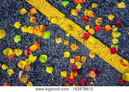Fall Foliage bright brilliant Colors of Fall Autumn Colorful Leaves Central Texas on the ground with black asphalt with spots of Colors with yellow parking stripe