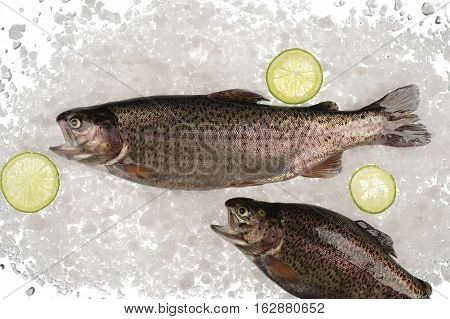 Trout set with lime, on a white background, view from above