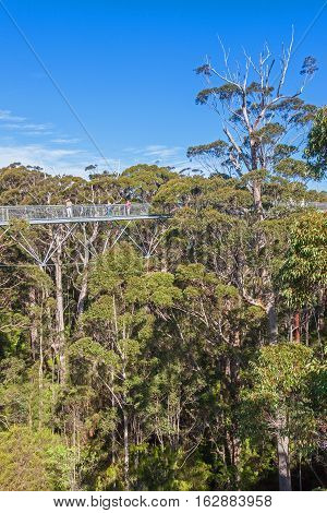 Walpole, Australia, September 21, 2010: Tourists enjoying the Tree Top Walk in the Valley of the Giants Walpole-Nornalup National Park near Walpole Western Australia