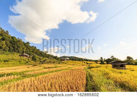 Terraced Rice Field After Harvesting