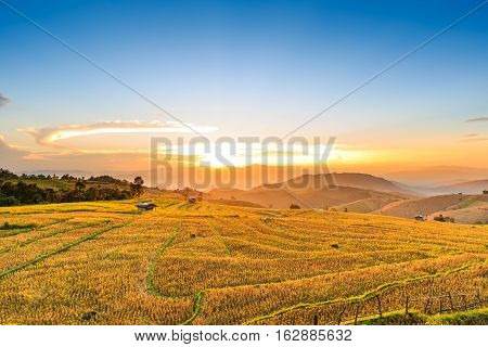 Terraced Rice Field After Harvesting At Sunset