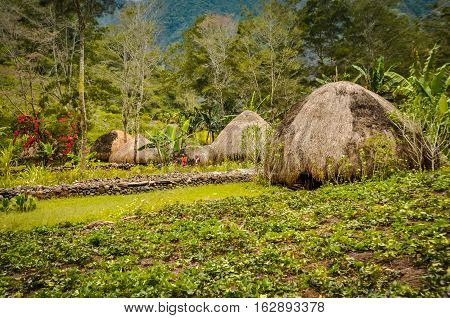 Straw Houses With Gardens