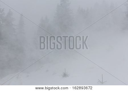 Winter scenery with fir trees in snow blizzard, and trekking path in the forest