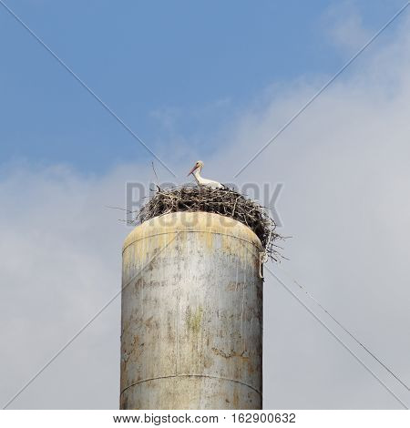 Stork on a roof of a water tower. Stork nest.