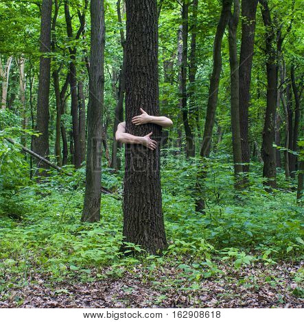 Tree Hugging. Close-up Of Hands Hugging Tree A