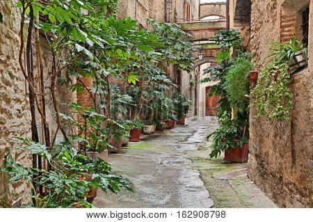 Bevagna, Umbria, Italy: picturesque narrow alley with ancient arches and plants in the old town