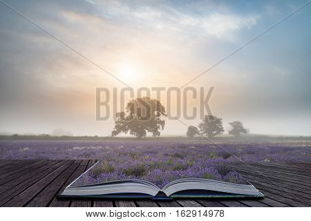 Beautiful Dramatic Misty Sunrise Landscape Over Lavender Field In English Countryside Coming Out Of
