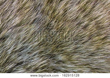 Fur arctic fox. Fur texture. Fur texture and background.