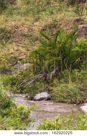 Masai Mara landscape. Green palm and water. Kenya, Africa