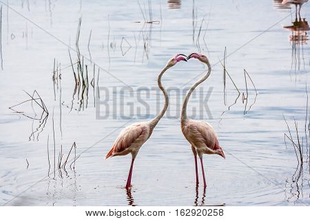 Pink flamingo. Nakuru, Kenya. Africa Second Edition