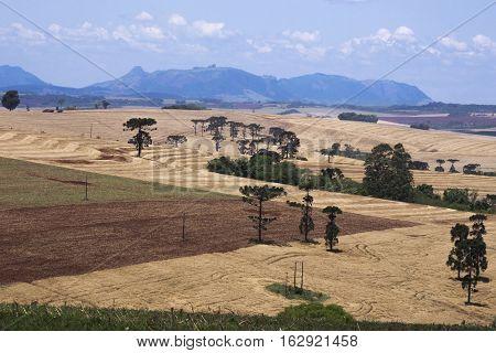 Rural scene sky farm rural area agriculture