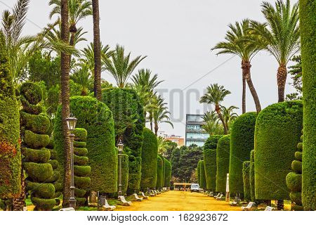 green park plants in Cadiz, Spain. Genovese garden