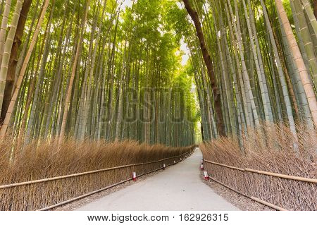 Bamboo forest in Kyoto, Japan, bamboo forest at Arashiyama