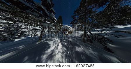 Wide Panorama Chalets And Snowboard In Winter Forest Under A Starry Sky