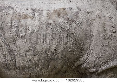 Detail Of The Skin Of A White Rhinoceros