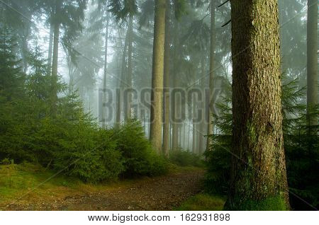 Enchanted trees in foggy forest. Mystical forest in green fog in the morning. Old Tree. Beautiful landscape with trees colorful leaves and fog. Nature. Misty forest with magic atmosphere