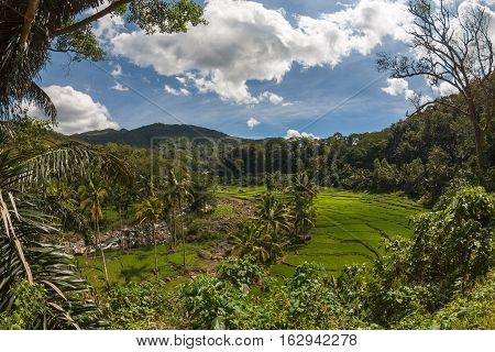 Rice fields terraces on Flores island, East Nusa Tenggara, Indonesia