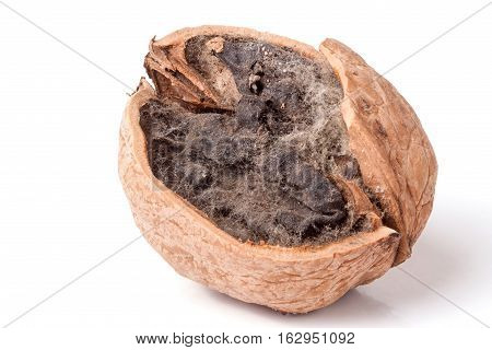 spoiled walnut with mold isolated on white background closeup.