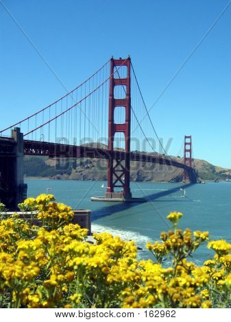 Golden Gate Bridge With Yellow Flowers