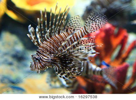 tropical sea fish in aquarium poster
