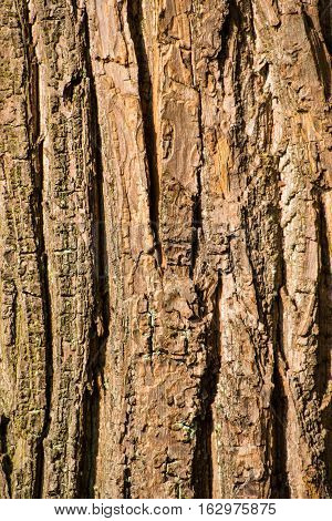 bark from a leaf tree at noon