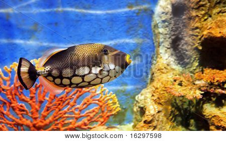 tropical sea fish in aquarium