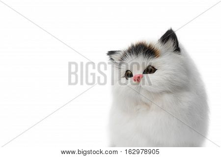 doll cat cute beautiful on white background with copy space for add text