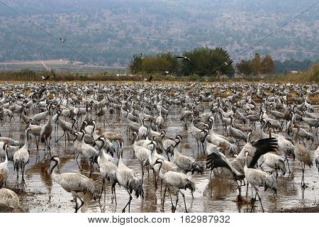 National Bird Sanctuary is located in the Hula Valley in northern Israel.