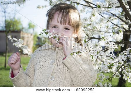 Spring bright sunny day in the flowering cherry garden beautiful little girl holding a cherry twig.