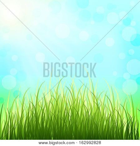 Fresh young grass in the spring sunshine. Spring background. The revival of nature after winter sleep. Fabulous bright natural background with bokeh.