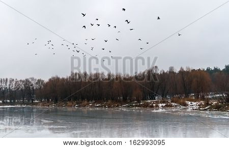 flock of birds flew up on the ice lake and snowy forest landscape.