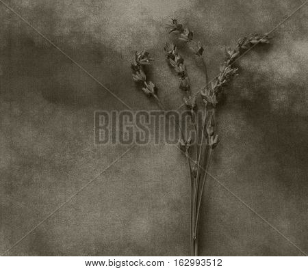 Dry lavender on marble - condolence card with deepest sympathy