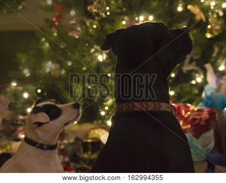 Two dogs looking at sparkling holiday lights animal holiday Christmas or New Years card or background image with room for copy