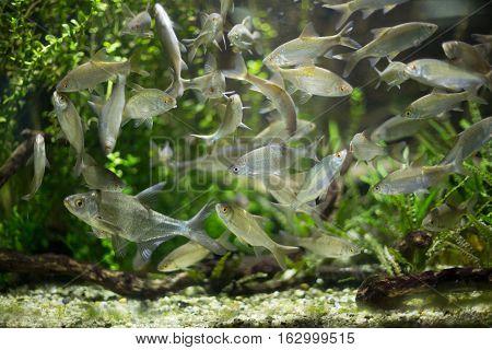 Colorful Fish Swimming In An Aquarium