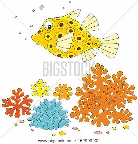 Yellow spotted boxfish swimming over corals in a tropical sea