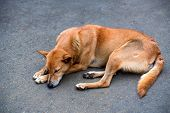 Sad lonesome stray dog sleeps on ground poster
