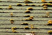 Old mossy asphalt roofing shingles in need of replacement poster