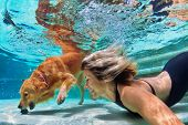 Underwater action. Smiley woman plays with training golden retriever puppy in swimming pool - jump and dive. Active water games with family pet popular dog breed like companion on summer vacation poster