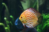 Multi Colored Tropical Fish In Saltwater Tank poster