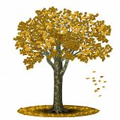 detached tree sycamore with yellow leaves on a white background poster
