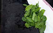 Fresh sorrel leaves on the old black table poster