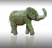 Blossoming bush in the form of the elephant poster