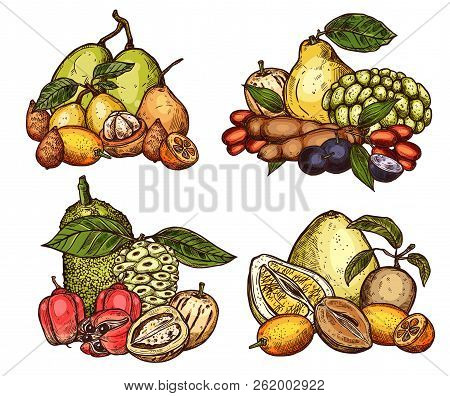 Exotic Tropical Fruits Harvest. Vector Sketch Of Pomelo Citrus, Jackfruit Or Tamarind And Salak Or A