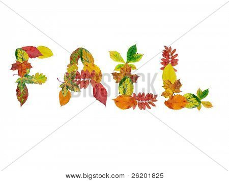 Fall writing composed of various colorful dead leaves over white background